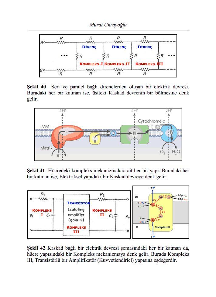 bioelektriksel transistor modeli2